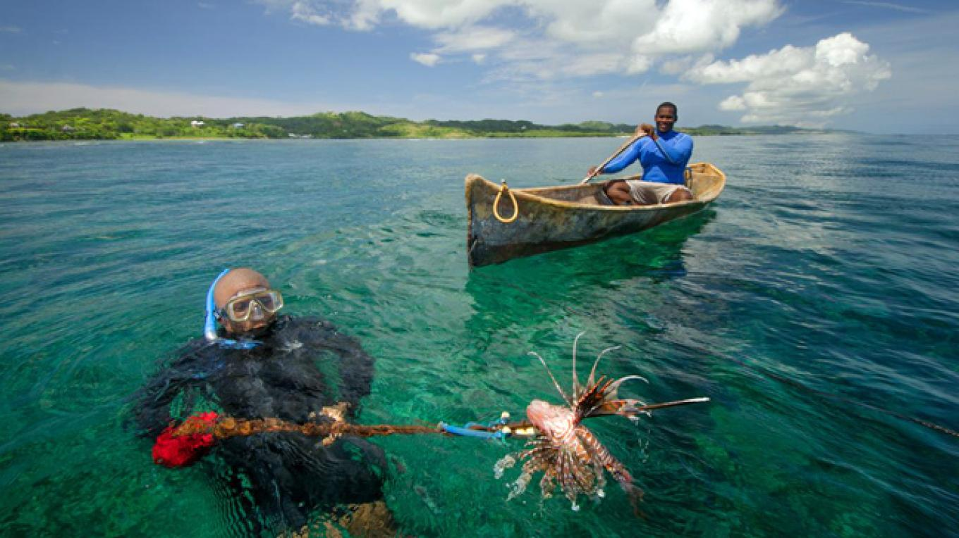 The Lionfish is now an invasive species to the Caribbean Sea with the potential to harm native species and habitats – Miguel Angel