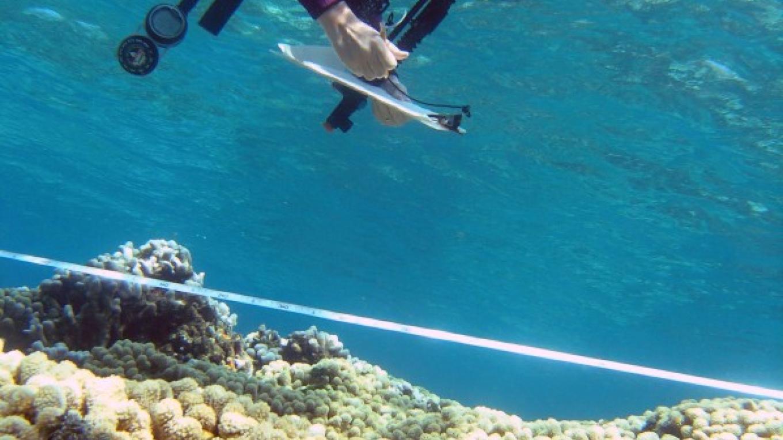 coral reef monitoring – Ian Drysdale