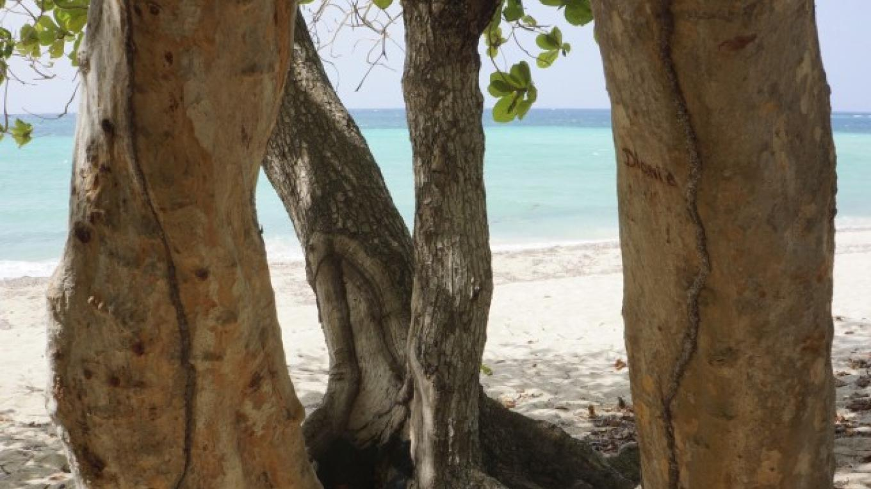View through the Seagrape trees / Vista a través de los arboles Coccoloba Uvifera. – Carey Satin