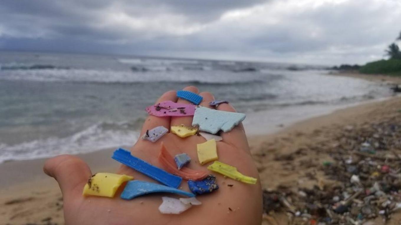 Plastic broken down into smaller pieces. – Utila Beach Cleanup