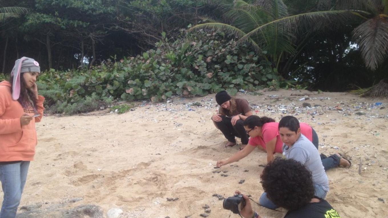 Sea turtles hatchlings release in Utila/ Liberación de neonatos tortugas marinas en Utila – BICA
