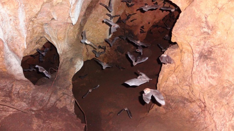 Bat Caves/ Murciélagos de Cueva – Steven Clayson