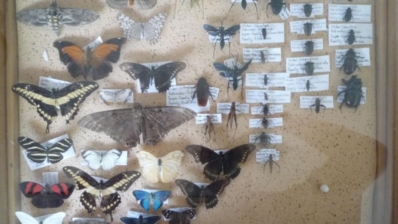 A tiny selection of the amazing diversity of insects you can find on the island of Utila/ Una pequeña parte de la diversidad asombrosa de insectos en la Isla. – Steven Clayson