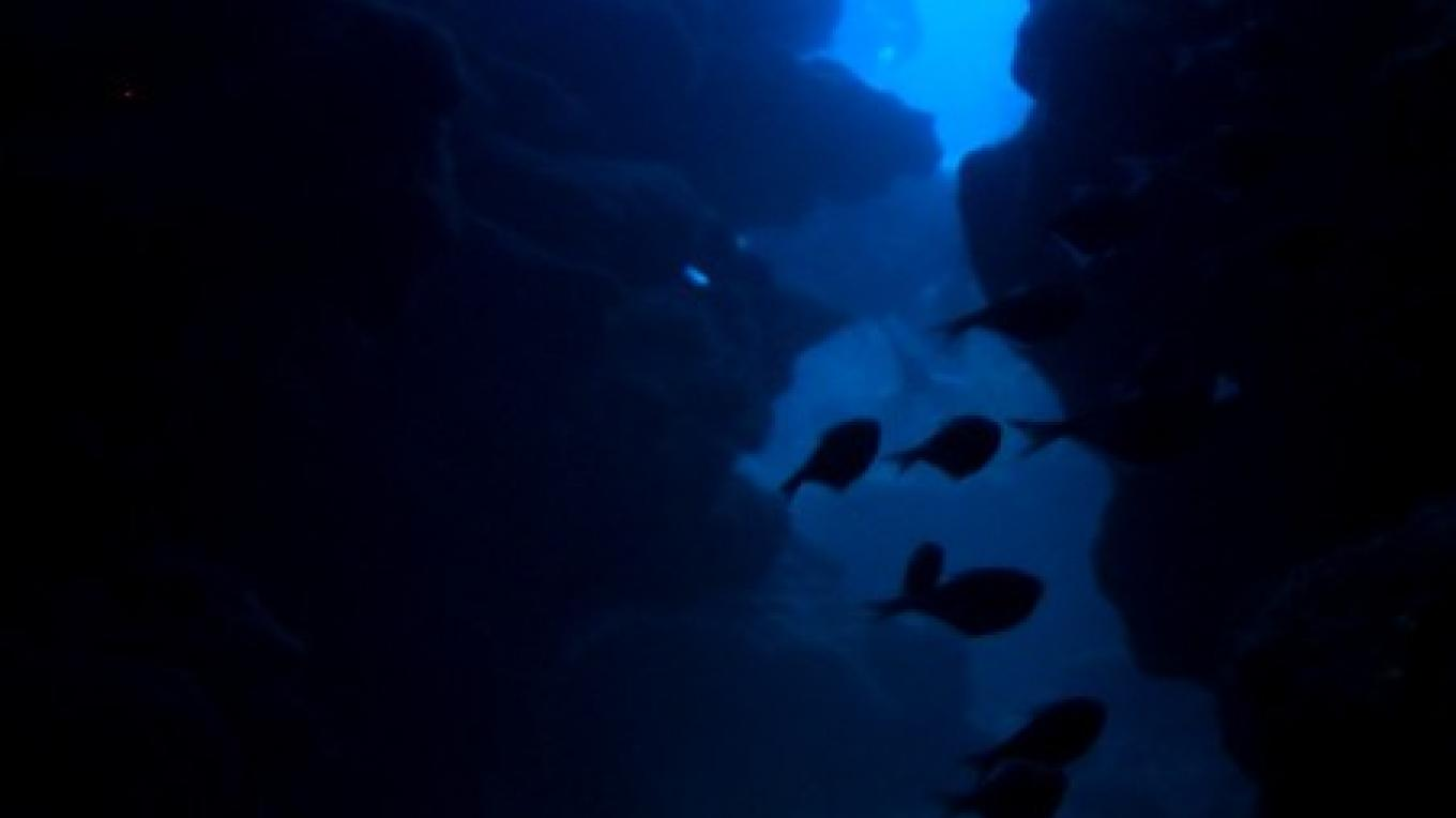 Mary's Place and its impressive vertical crevices should be at the top of every diver's bucket list! – Manlio Martinez