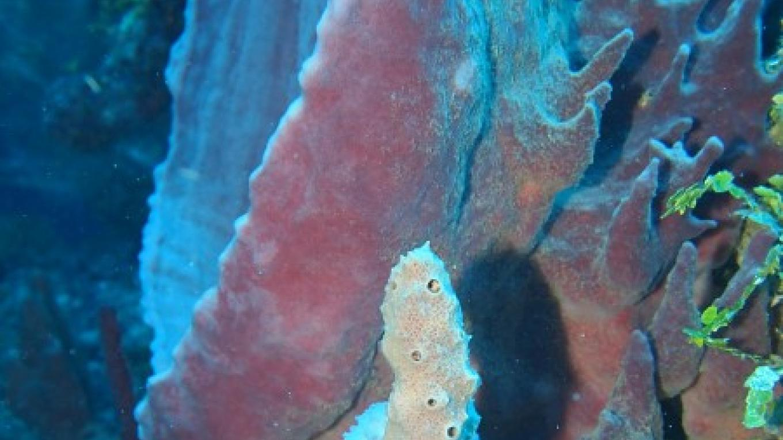 Azure Vase Sponge – Manlio Martinez
