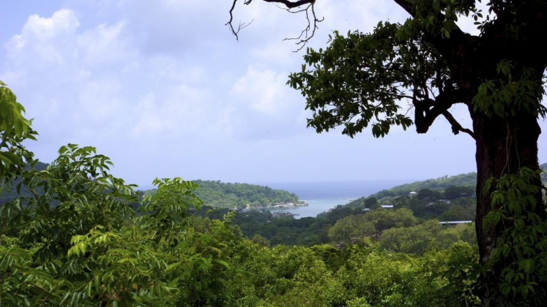 View of Oak Ridge / Vista de Oak Ridge – Carey Satin