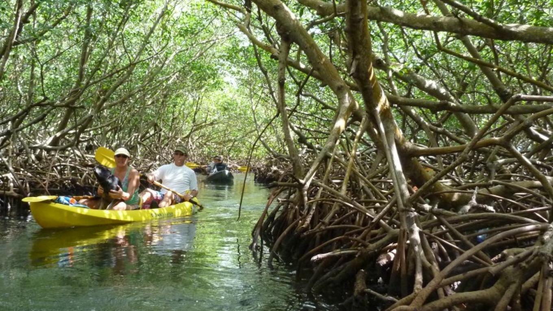 Upachaya kayaking through the mangroves / Kayak a través de los manglares en Upachaya – Upachaya