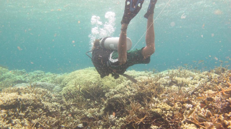 """Diving in the Bowl / Buceo en """"The Bowl"""" – Giacomo Palavicini"""