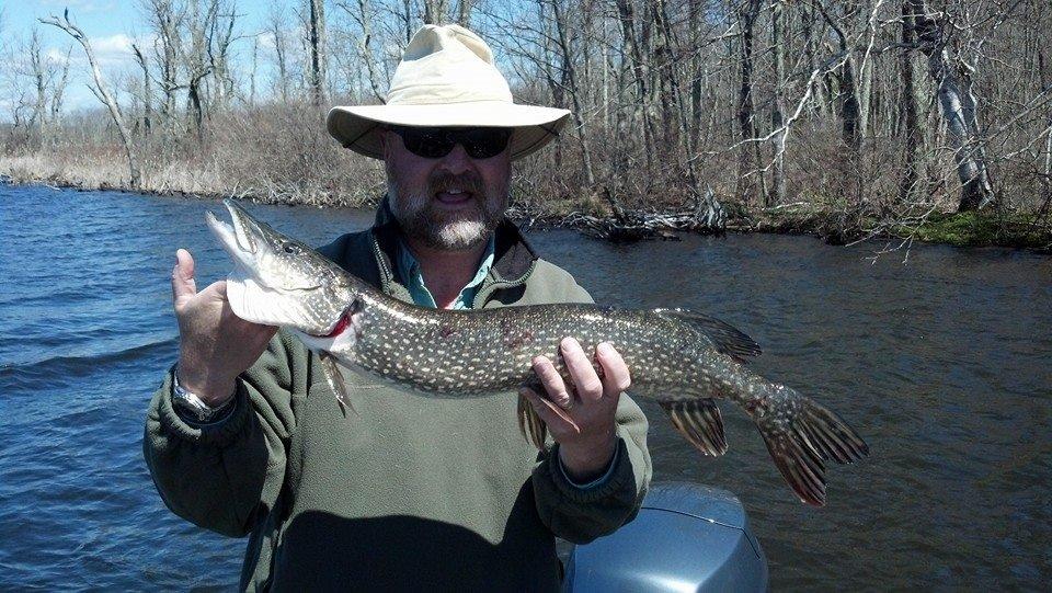 35 inch Pike
