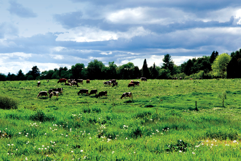 Agricultural Attractions