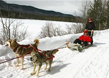 Private guided dog-sledding tours