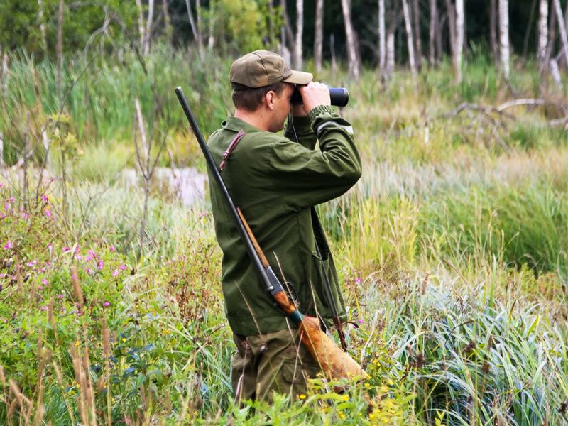 Maine Moose, Deer & Bear Hunting & More