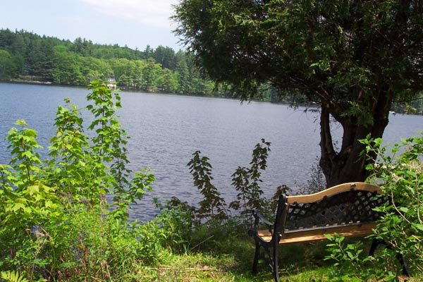 A quiet bench above the water
