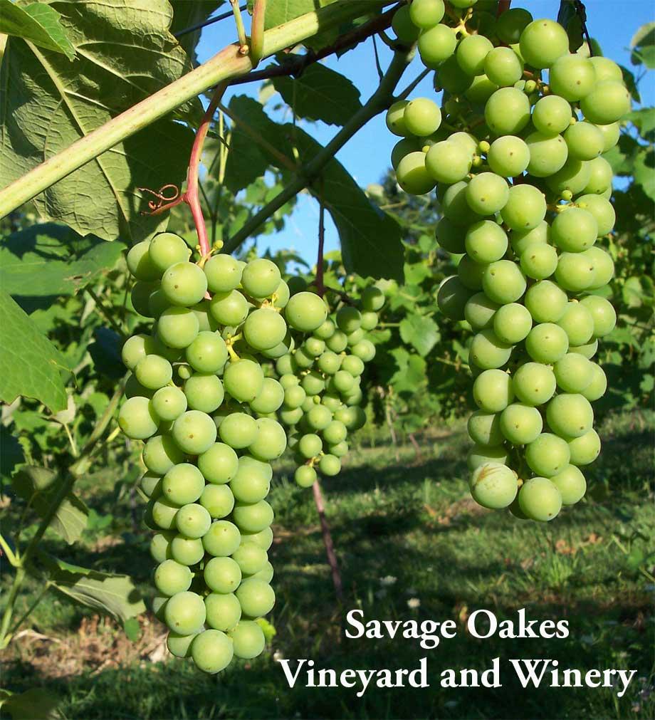Savage Oakes Vineyard & Winery