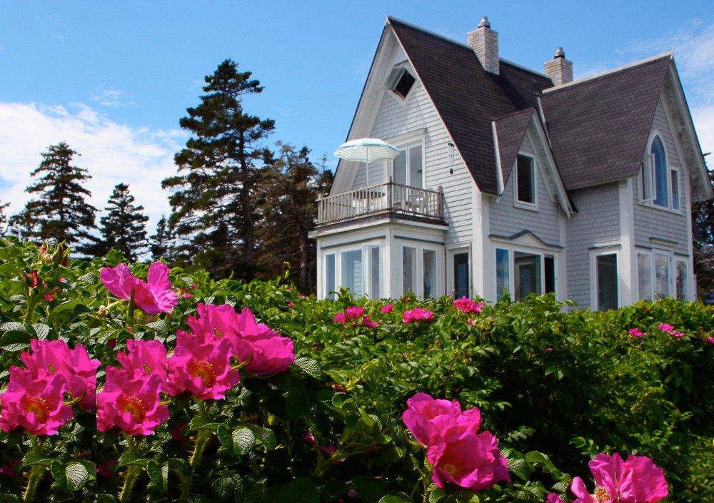 Great Duck Island House is surrounded by hedges of fragrant rugosa roses.