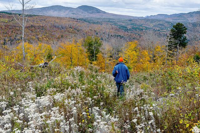 Maine's Fall Highland Hunting