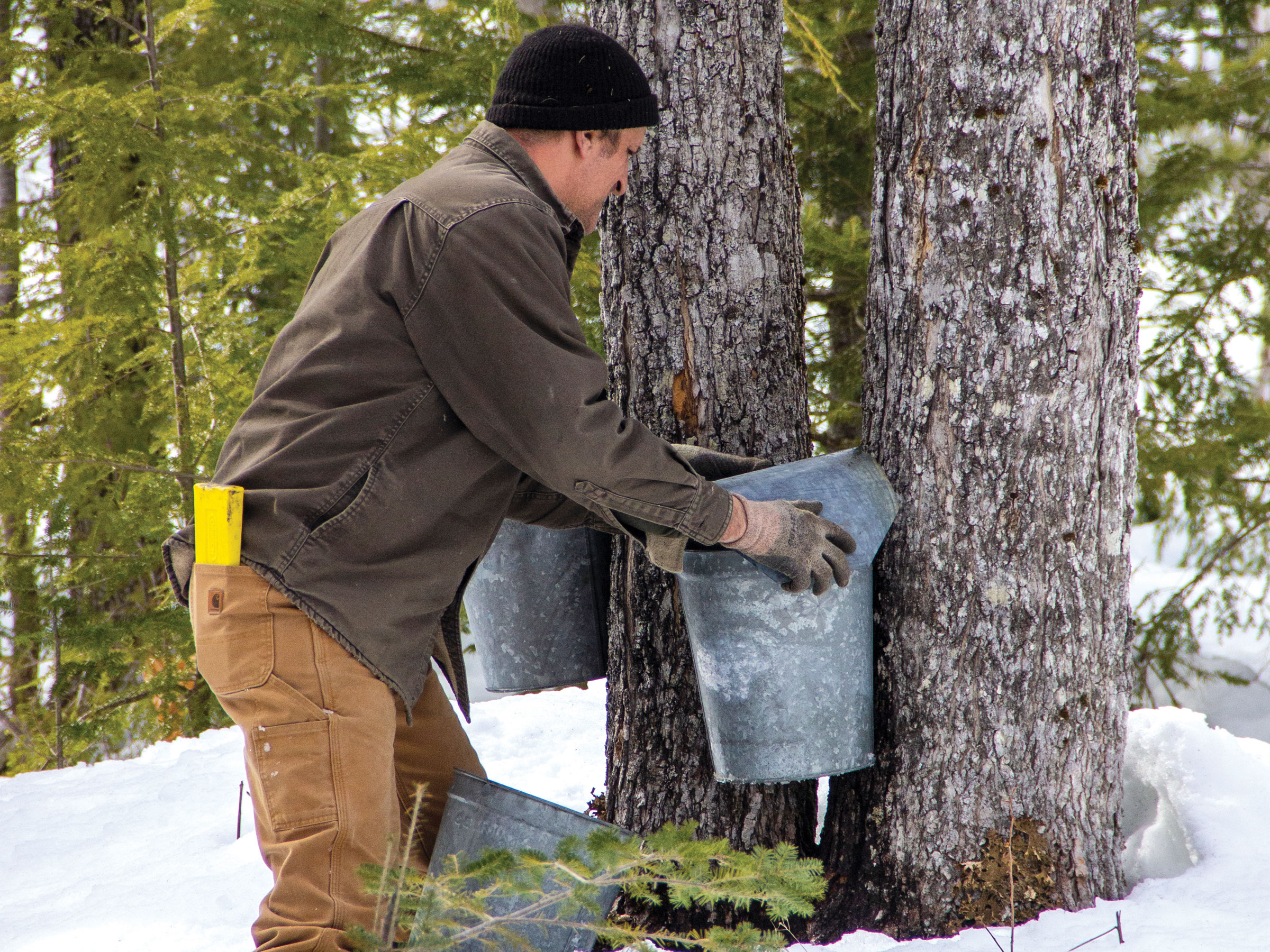 Tapping for Maple Sap in Maine's Kennebec Valley