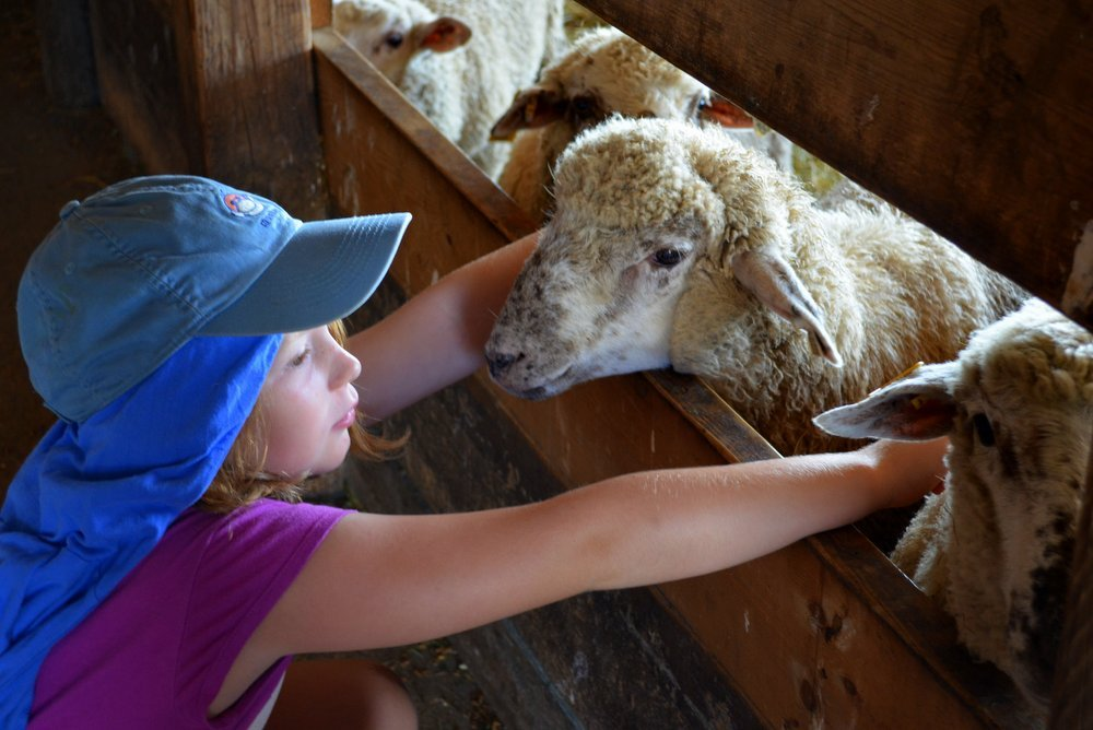 Visiting the animals in the barn at Wolfe's Neck Farm