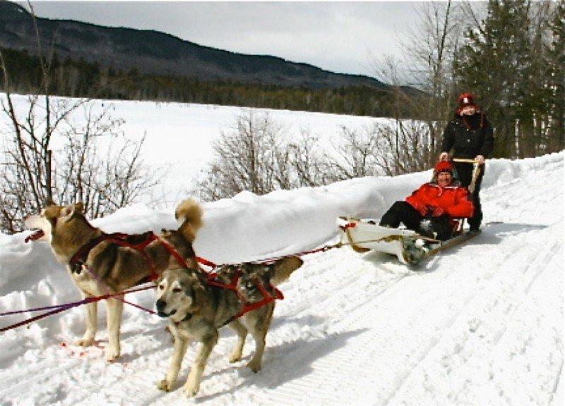 Go dogsledding!