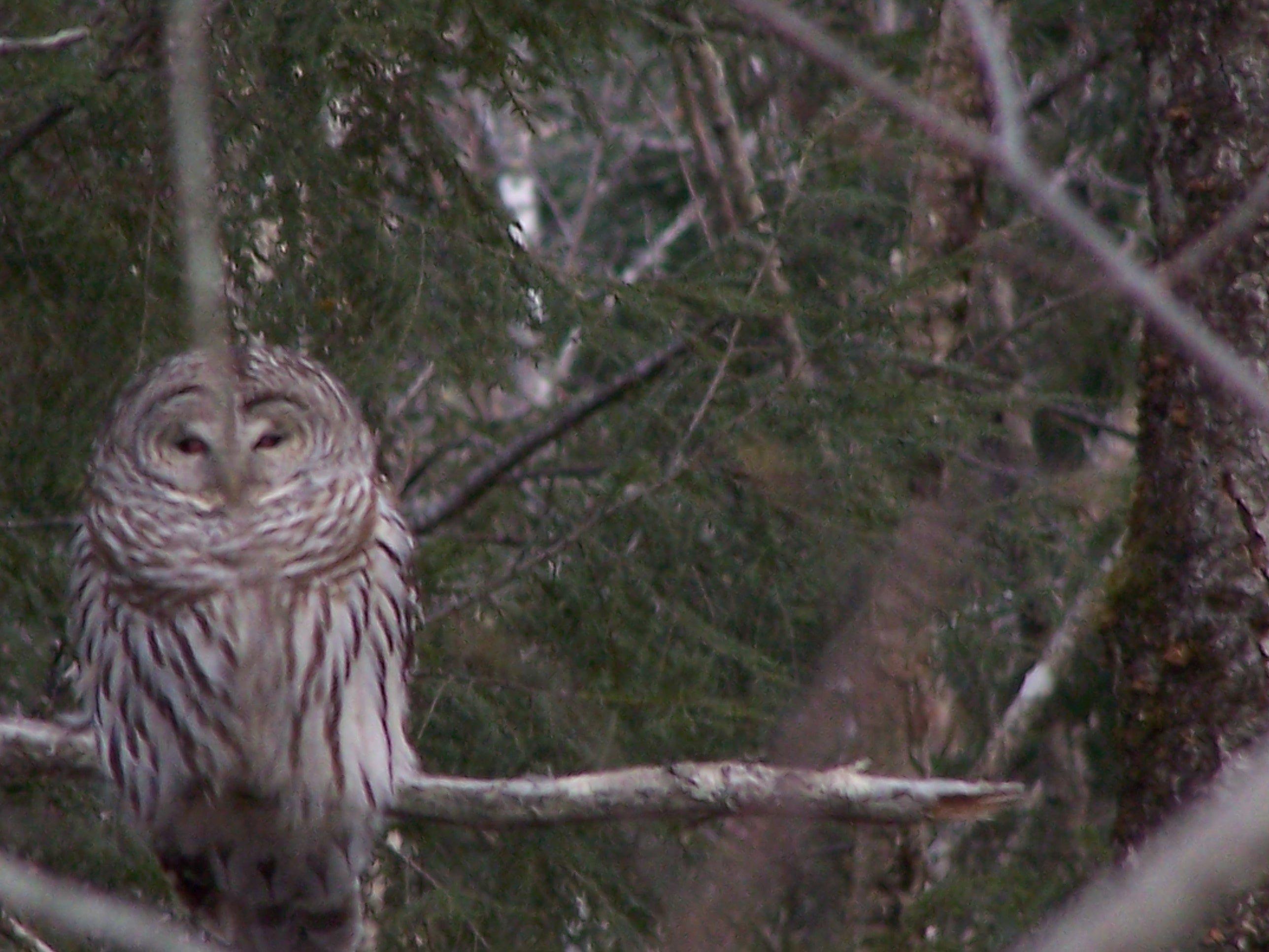 Owl keeping an eye on things