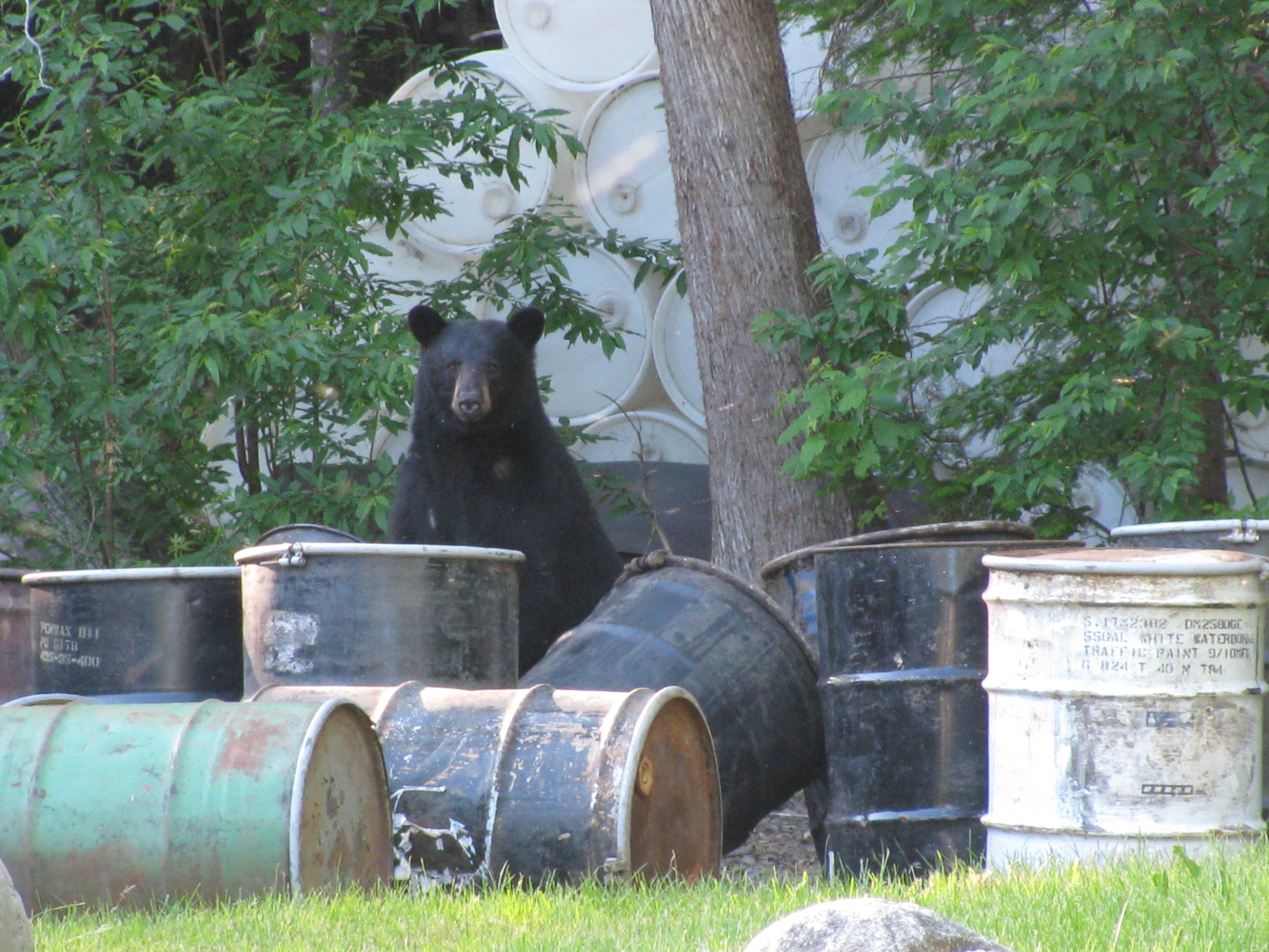 Our neighbors frequently visit us for a tasty summer snack...