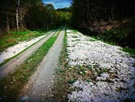 Spring road on way to our Lintongan Cabin