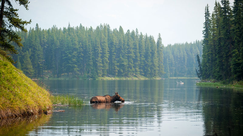 Moosehorn National Wildlife Refuge