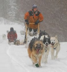Polly mushing with Maeve in lead