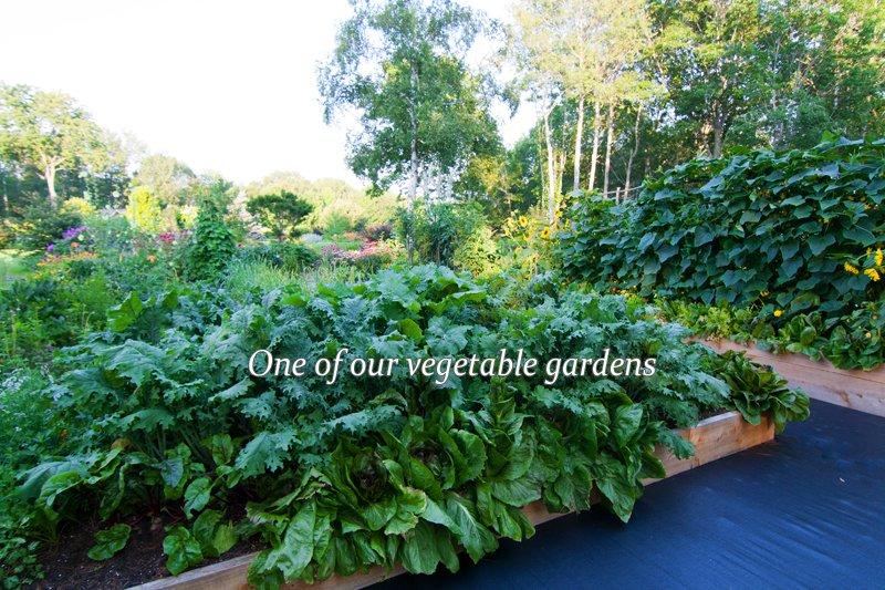 Our private organic veggie gardens