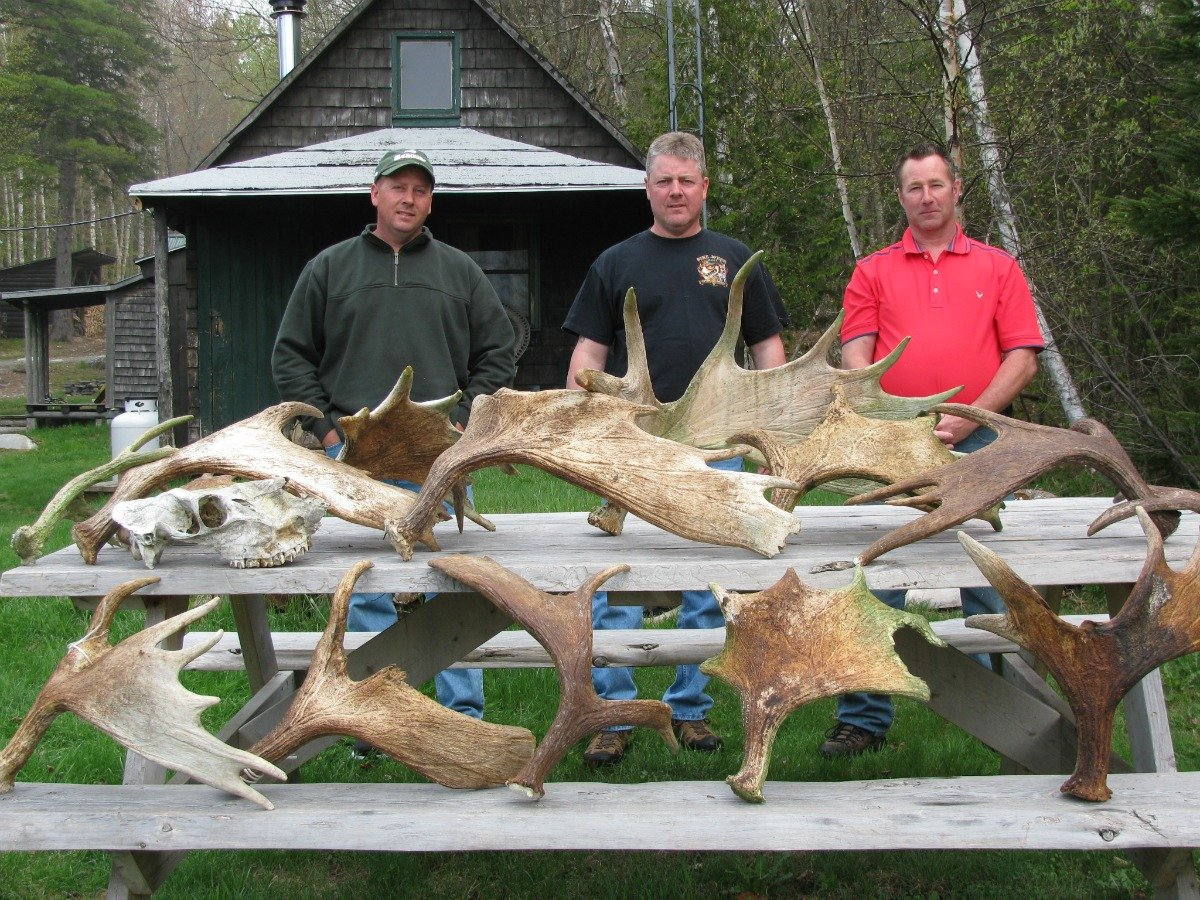 Antler hunts are extremely popular during the month of May!