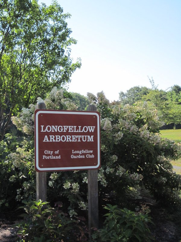 The hydrangea bed at the Longfellow Arboretum