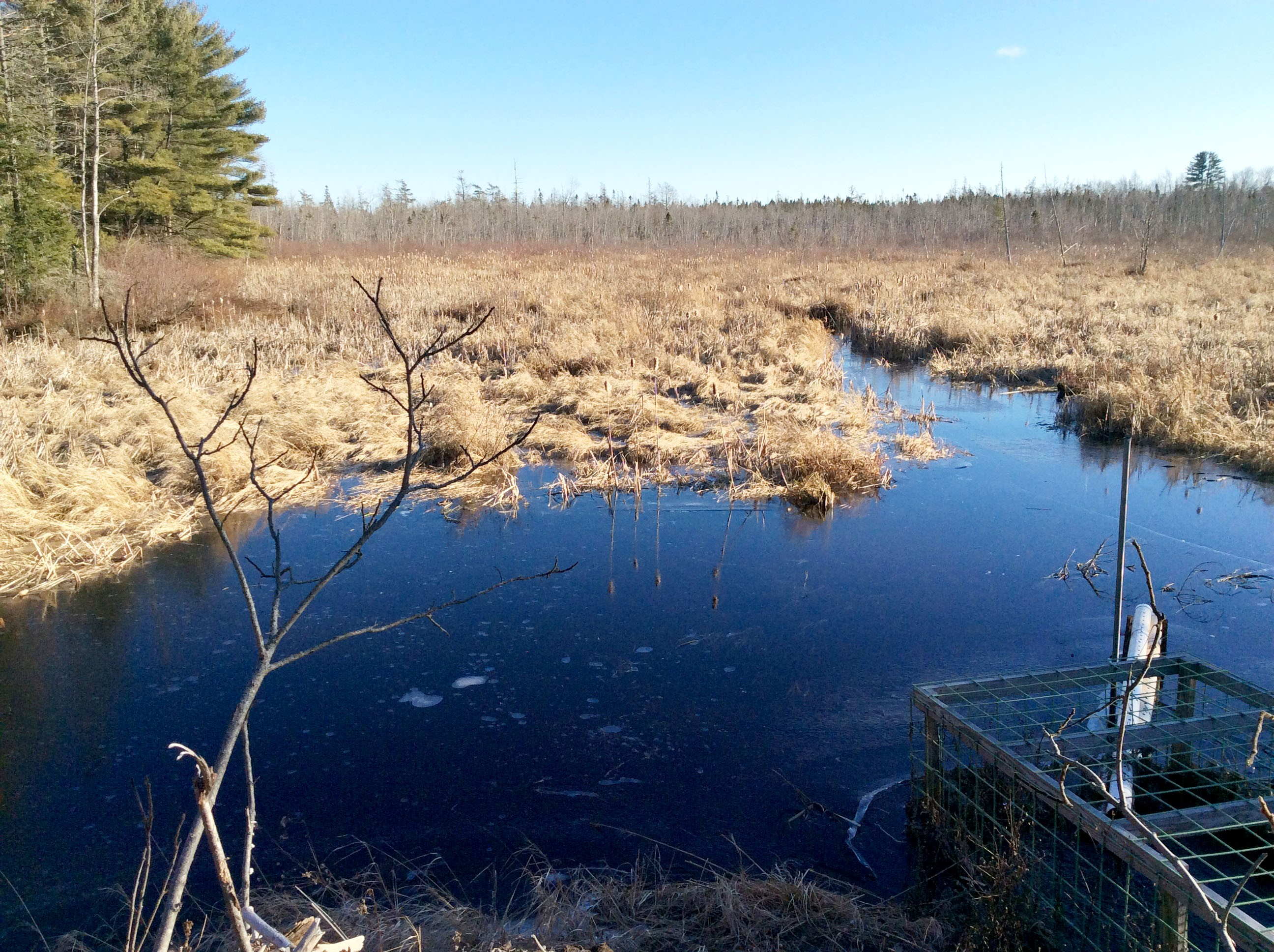 Orono landscapes provide a view of habitat for beaver, heron and pond life.