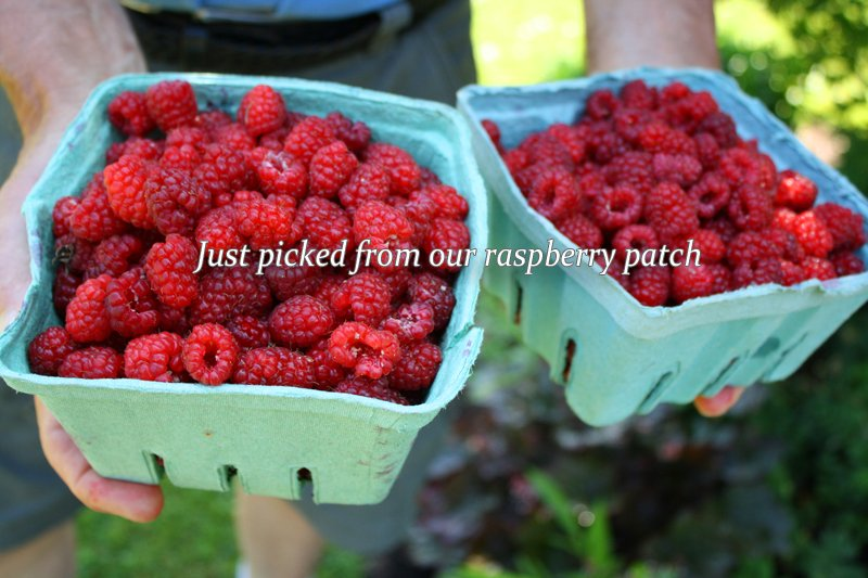 Raspberries from our gardens
