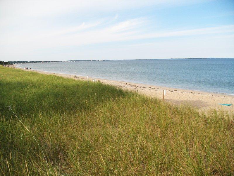 Dune grass on Ferry Beach.