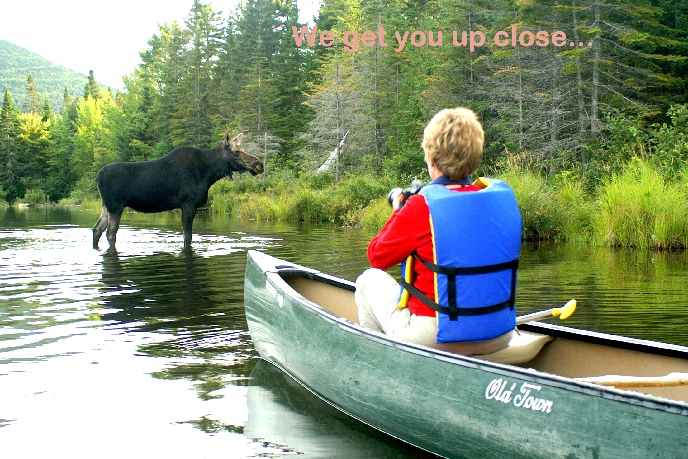 Moose Watching Tours