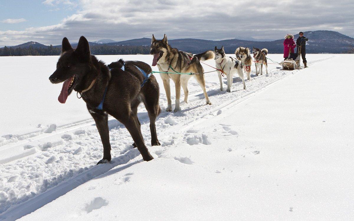 Dog sledding in Maine