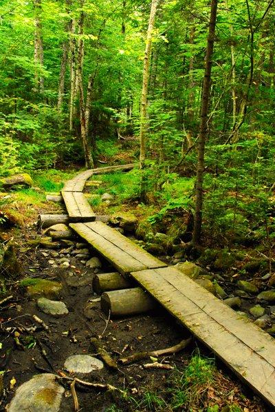 Pathway through Rangeley Lake State Park.