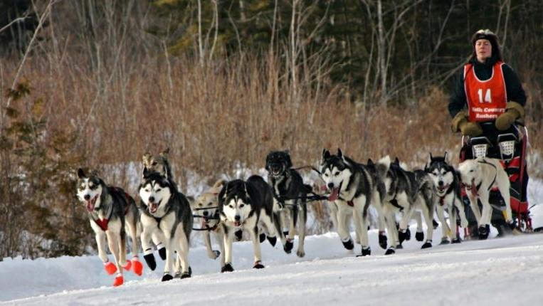 Wilderness Sled Dog Race