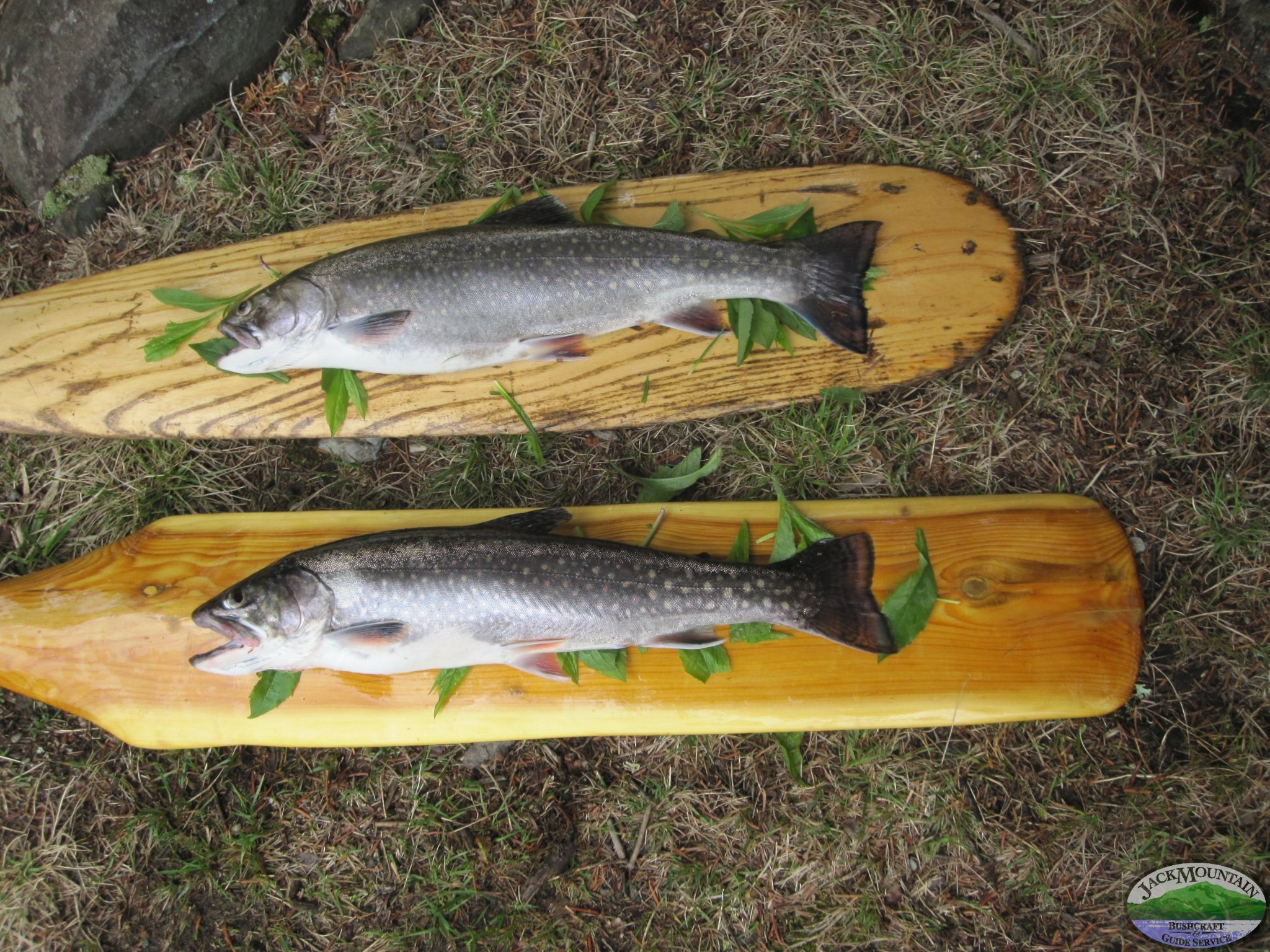 Brook trout proudly displayed on homemade canoe paddles.