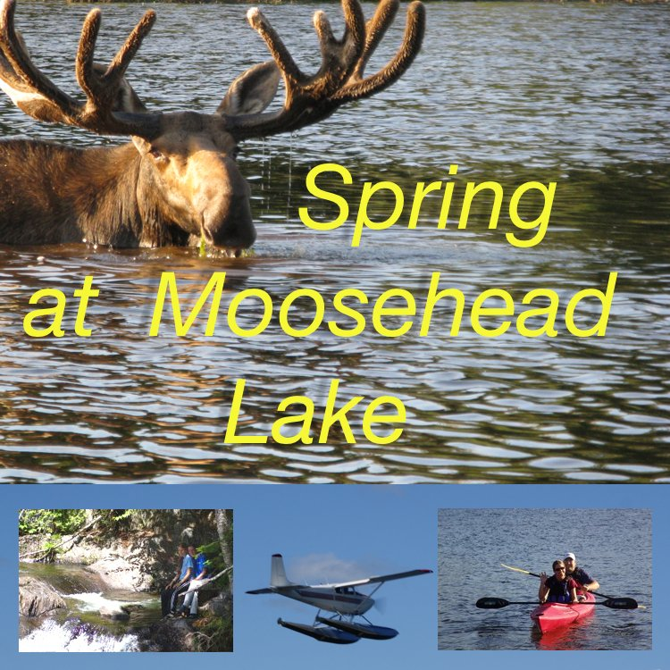 Spring is a glorious season in northern Maine...and the best time to see MOOSE!