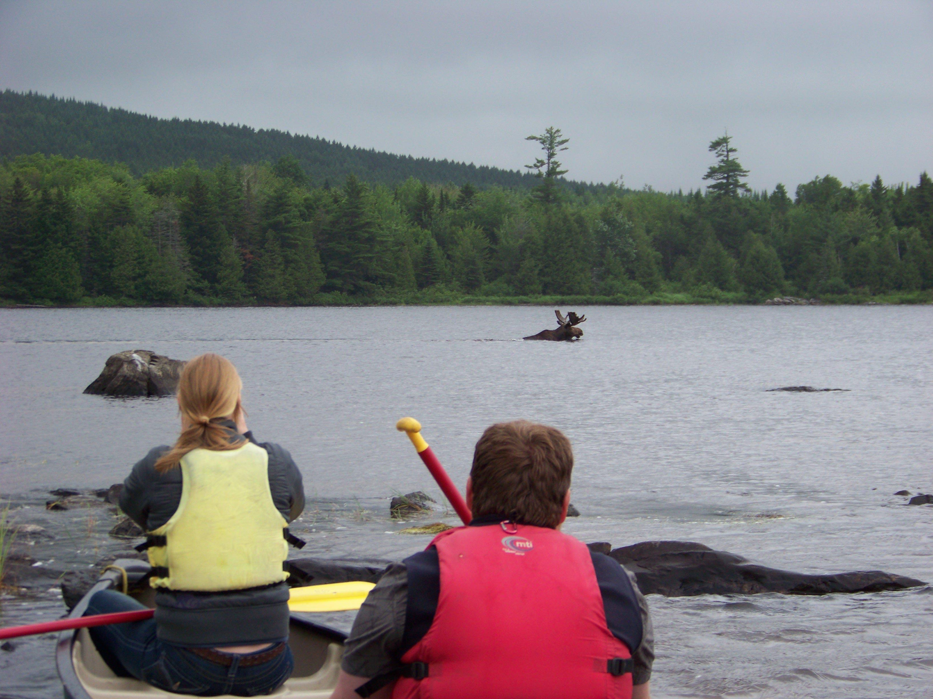 Maine Moose Canoe Tour