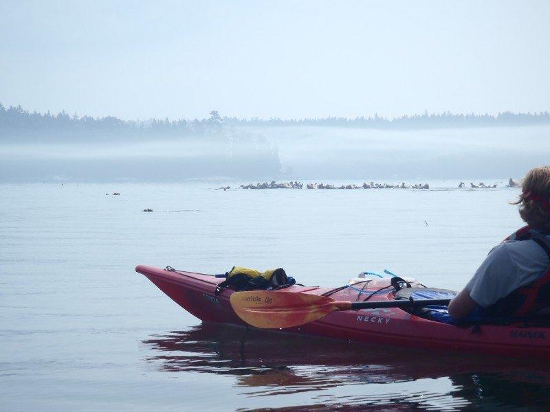 Wildlife Maine Kayak Trips