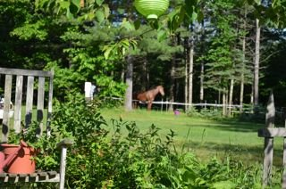 A horse lounging in a paddock at Memory Lane.
