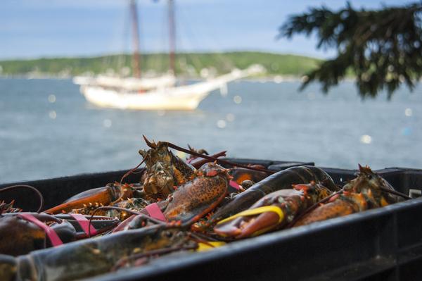 Cabbage Island Windjammer Lobsterbake