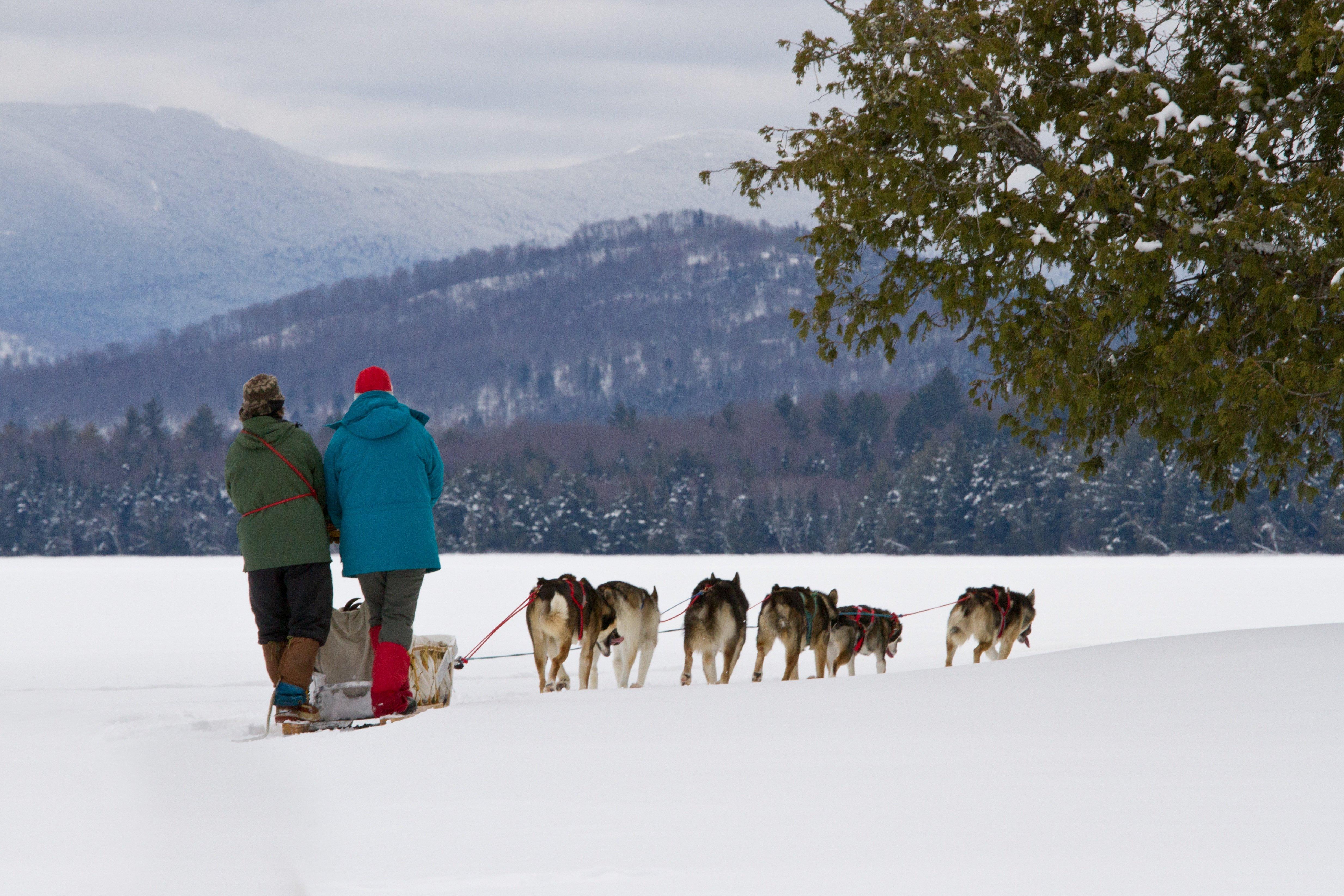 Dogsledding on Umbagog Lake