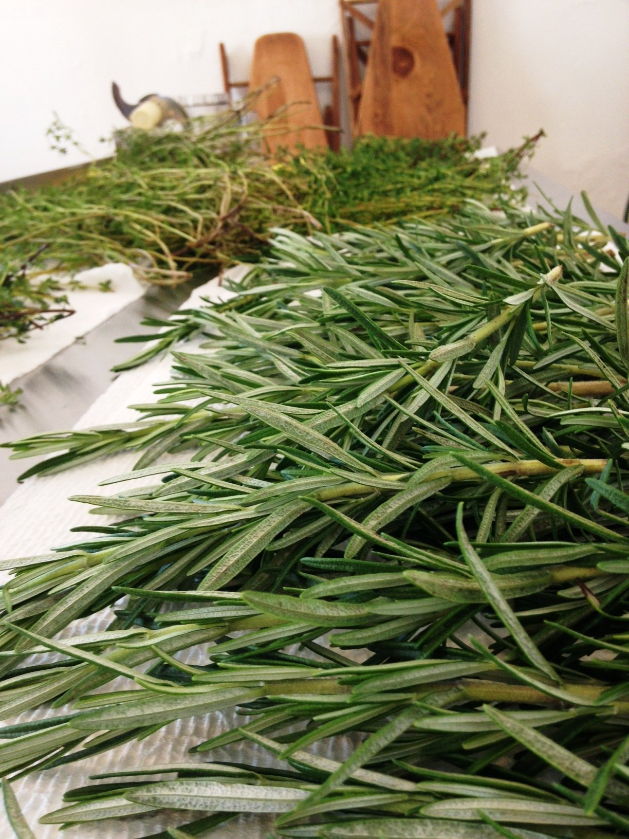 Fresh herbs from Bowery Beach Farm in Cape Elizabeth, ready to be chopped and cured!