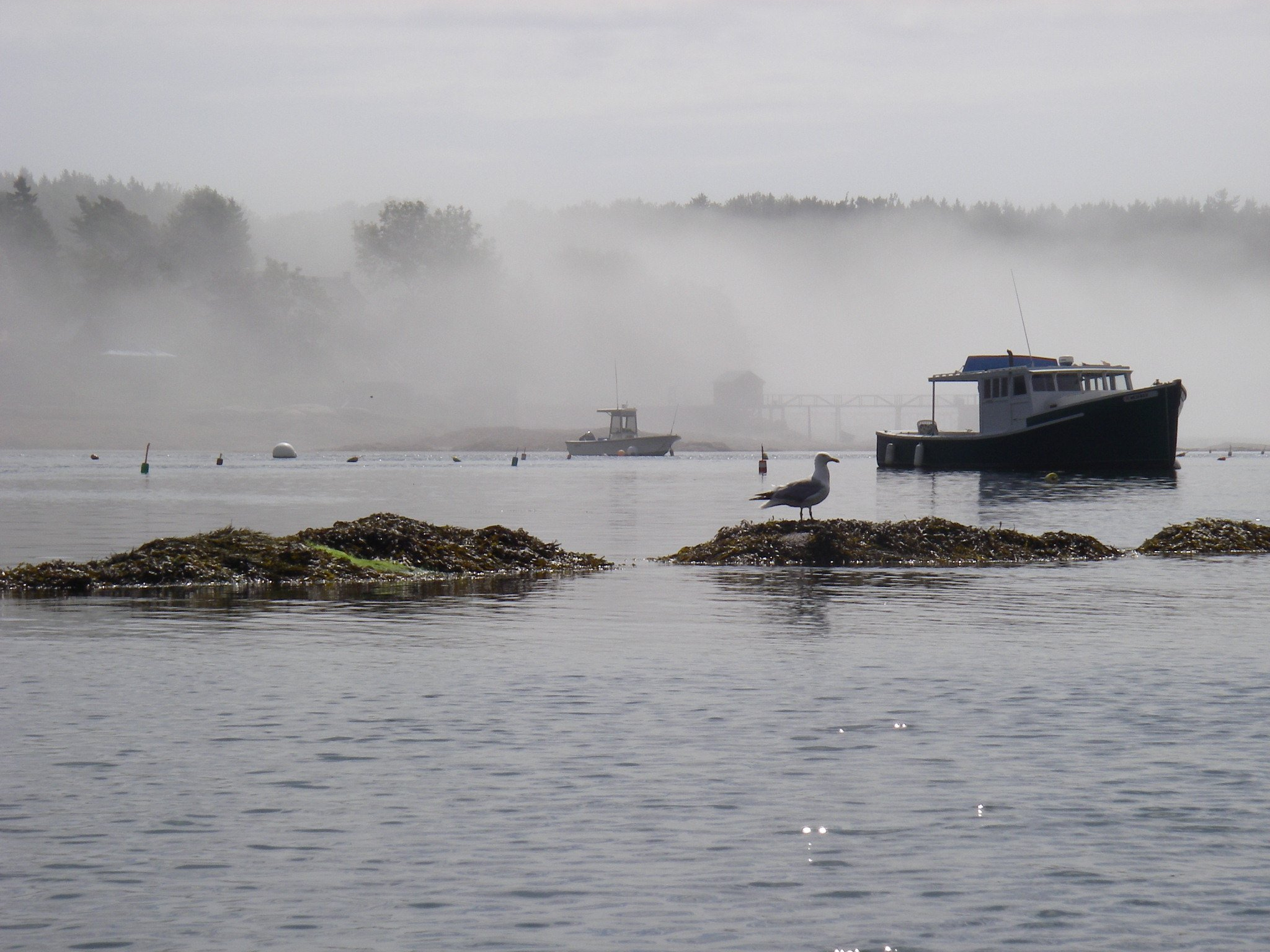 Foggy morning seen from the water in a sea kayak.