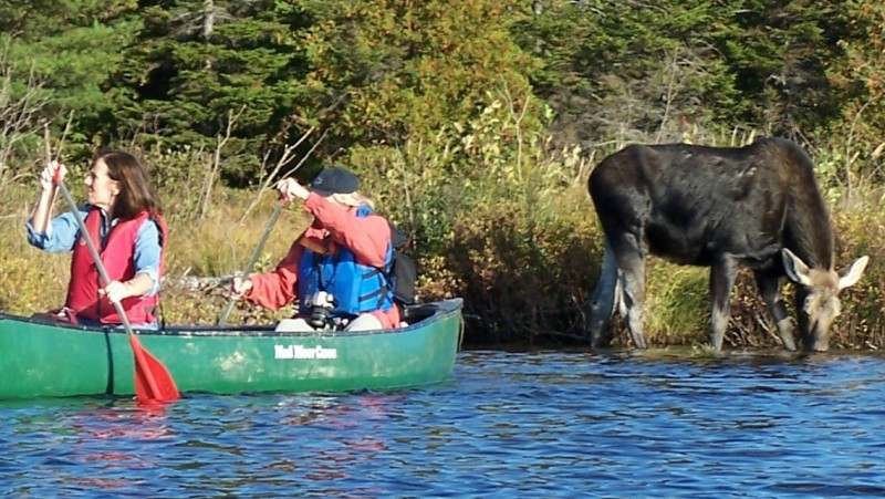 Moose Watching and Wildlife safari Tour and Lodging only $129 per person