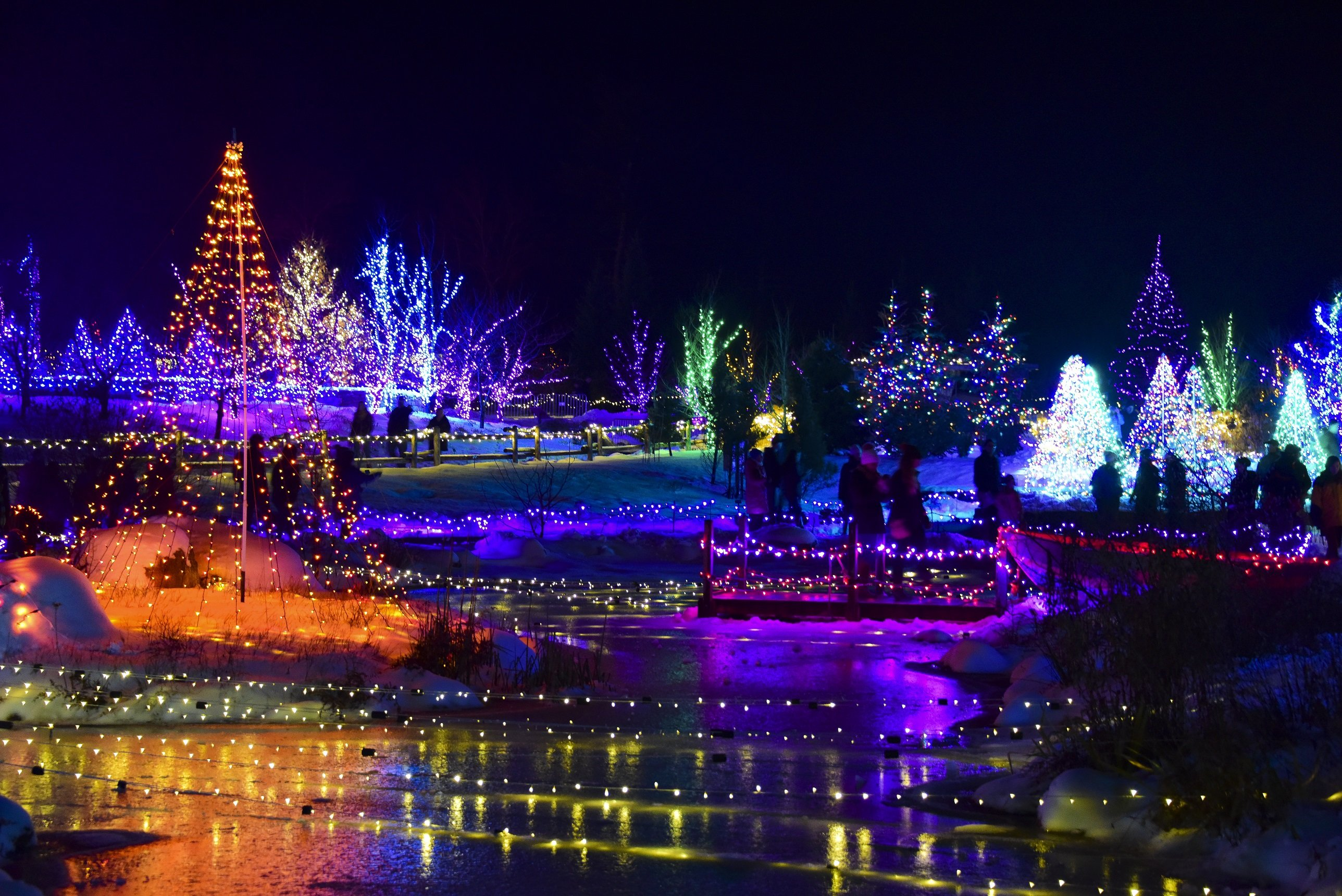 Lights reflected on the water during Gardens Aglow