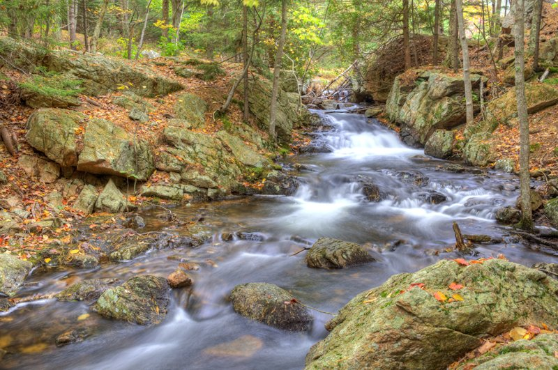 Colorful stream in Acadia National Park.